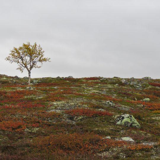 Långfjället naturreservat