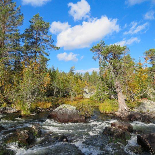 Töfsingdalen national park
